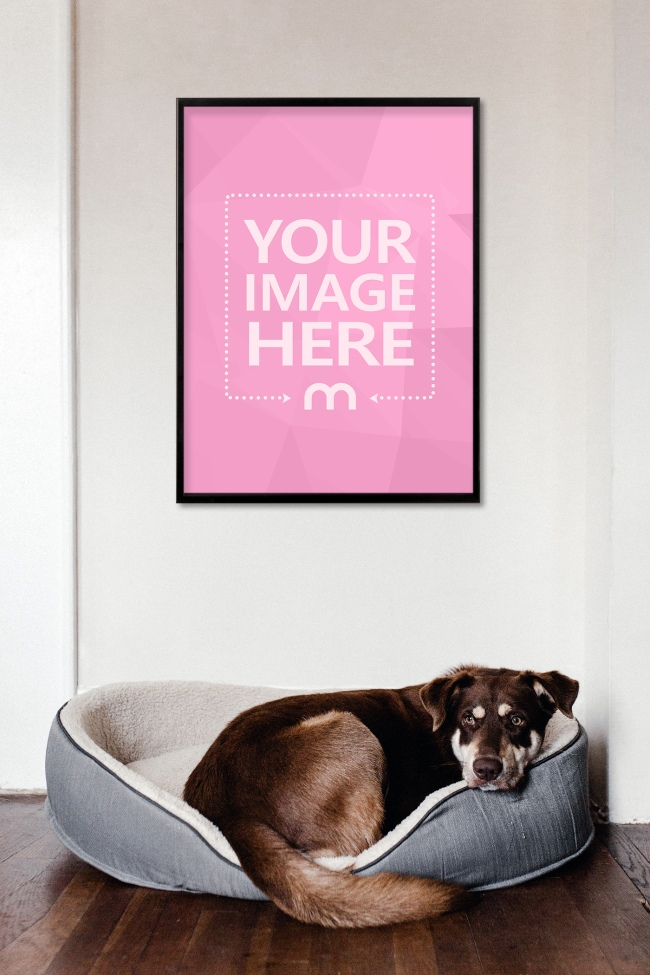Poster Hanging on Wall Above Sleeping Dog Mockup Generator preview image